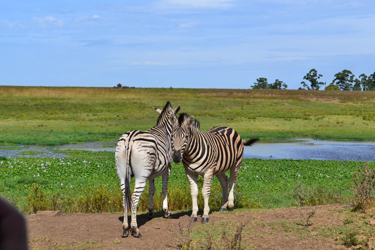 KwaZulu-Natal / Südafrika
