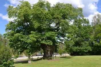 der Limonadenbaum von Pipi Langstrumpf